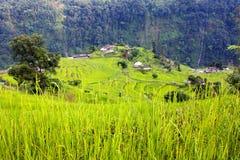 Padieveld en dorp in Annapurna nountains Stock Afbeeldingen