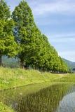 Padieveld en gevoerde bomen Royalty-vrije Stock Afbeeldingen