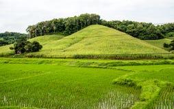 Padieveld en graanheuvelaanplanting, Chiang Mai royalty-vrije stock fotografie