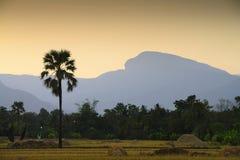 Padieveld in het noorden van Thailand royalty-vrije stock afbeelding