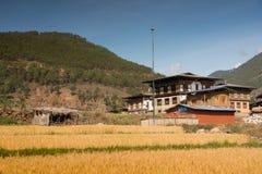 Padieveld in het platteland van Bhutan Royalty-vrije Stock Fotografie