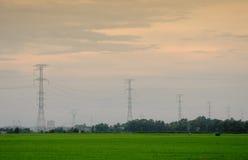 Padieveld met de pylonen van de hoogspanningsmacht royalty-vrije stock afbeelding