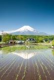 Padieveld met MT Fuji Stock Foto