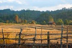 Padieveld na oogst stock afbeeldingen