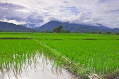 Padieveld onder berg op centraal van Thailand Stock Foto