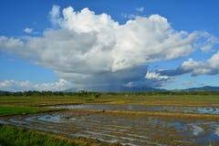 Padieveld onder bewolkte blauwe hemel Stock Afbeelding