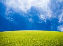 Padieveld op blauwe hemelachtergrond Stock Afbeeldingen