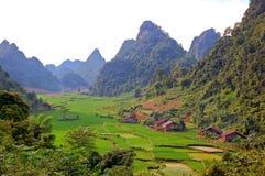 Padieveld op de vallei in Azië Stock Foto