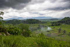 Padieveld op het landbouwbedrijf in de wildernis op het landen wordt voorbereid die Stock Foto