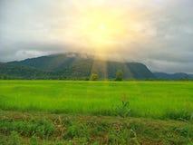 Padieveld in Thailand royalty-vrije stock fotografie