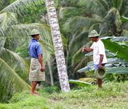 PADIEVELDarbeiders IN BALI Stock Foto's