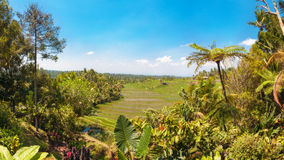 Padievelden, Bali, Indonesië Stock Foto's