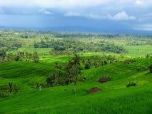 Padievelden in Bali-Indonesië Stock Foto's