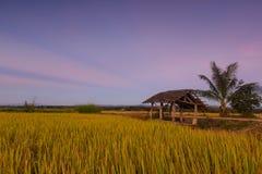 Padievelden bij zonsondergang in Lampang, Thailand Royalty-vrije Stock Afbeeldingen
