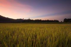 Padievelden bij zonsondergang in Lampang, Thailand Stock Afbeelding