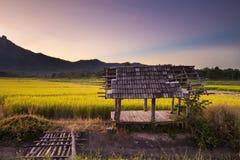 Padievelden bij zonsondergang in Lampang, Thailand Royalty-vrije Stock Afbeelding