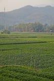 Padievelden in de bergen van Thailand Stock Foto