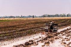 Padievelden die zijn geoogst en voor het volgende rijst planten voorbereidingen getroffen stock afbeelding