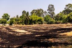 Padievelden die zijn geoogst en voor het volgende rijst planten voorbereidingen getroffen royalty-vrije stock foto