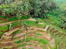 Padievelden en bossen op Bali, de mening vanaf de bovenkant stock afbeelding