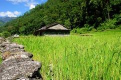 Padievelden en dorp. Het landschap van Himalayan Stock Foto
