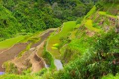 Padievelden gelaagd met terrassen in Filippijnen royalty-vrije stock afbeelding