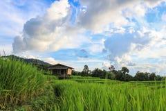 Padievelden in het platteland van Thailand stock foto's