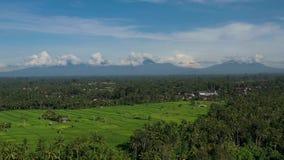 Padievelden met de lengte van de vulkaanmening in een zonnige dag stock footage
