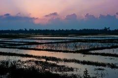 Padievelden met water worden gevuld dat Kleurrijke orde over de gebieden Centraal Vietnam Hoi een stad, Tam Hiep-commune van Quan royalty-vrije stock afbeelding