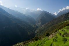 Padievelden in Nepal Stock Afbeeldingen