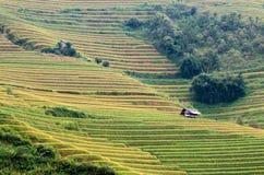 Padievelden in Noordwestenvietnam royalty-vrije stock fotografie