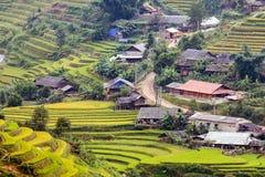 Padievelden in Noordwestenvietnam royalty-vrije stock afbeelding