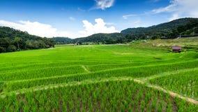 Padievelden op het terrasvormige Noorden van Thailand stock fotografie