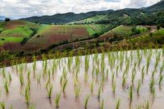Padievelden op terrasvormig in Chiang Mai, Thailand royalty-vrije stock afbeeldingen