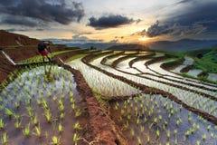 Padievelden op terrasvormig in Chiang Mai, Thailand Stock Foto's