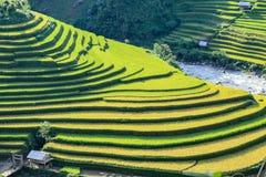 Padievelden op terrasvormig in rainny seizoen bij Mu Cang Chai, Yen Bai, Vietnam stock afbeeldingen