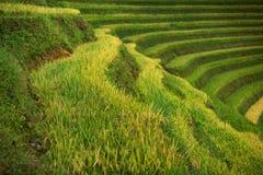 Padievelden op terrasvormig van Mu Cang Chai, YenBai, Vietnam Rijst F royalty-vrije stock foto's