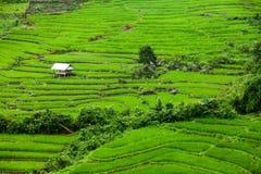 Padievelden op terrasvormig van Mu Cang Chai, YenBai, Vietnam Rijst F Royalty-vrije Stock Fotografie