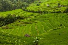 Padievelden op terrasvormig van Mu Cang Chai, YenBai, Vietnam Rijst F Royalty-vrije Stock Afbeeldingen