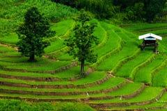 Padievelden op terrasvormig van Mu Cang Chai, YenBai, Vietnam Rijst F Royalty-vrije Stock Foto