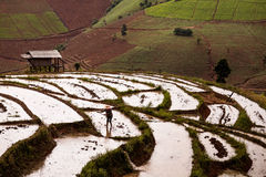 Padievelden op terrasvormig van Mu Cang Chai, YenBai, Vietnam Rijst F Stock Foto's