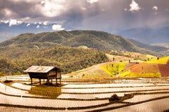 Padievelden op terrasvormig van Mu Cang Chai, YenBai, Vietnam Rijst F Stock Foto