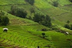 Padievelden op terrasvormig van Mu Cang Chai, YenBai, Vietnam Rijst F Stock Fotografie