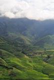Padievelden op terrasvormig van Turkije Le, YenBai, Vietnam Stock Foto