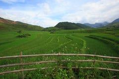 Padievelden op terrasvormig van Xa Nam Bung, Vietnam Royalty-vrije Stock Foto's