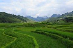 Padievelden op terrasvormig van Xa Nam Bung, Vietnam Stock Afbeelding