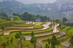Padievelden op terrasvormig in Wenzhou, China Royalty-vrije Stock Foto's