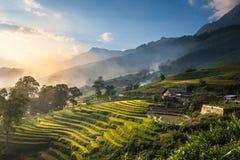 Padievelden op terrasvormig in zonsondergang in Sapa, Lao Cai, Vietnam Royalty-vrije Stock Afbeeldingen