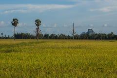 Padievelden in platteland Royalty-vrije Stock Afbeeldingen