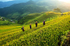 Padievelden terrasvormig van Mu Cang Chai, Vietnam Royalty-vrije Stock Fotografie